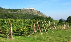 Pálava – Pavlovské vrchy, vápencové skály a vinice